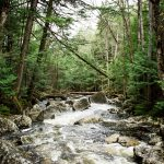 Image tree-water-nature-forest-waterfall-creek-101489-pxhere.com